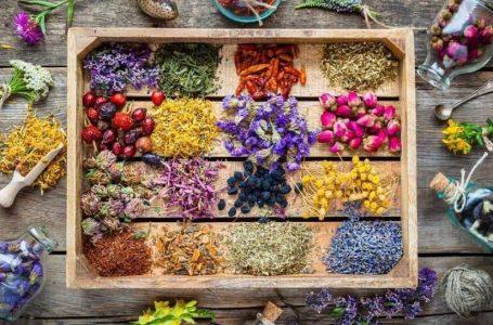 ۱۰ گیاه برای نابودی ویروس ها