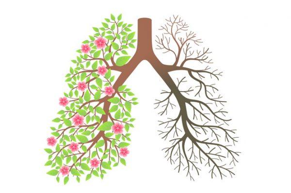 گیاهان دارویی برای شستشو و پاکسازی ریه