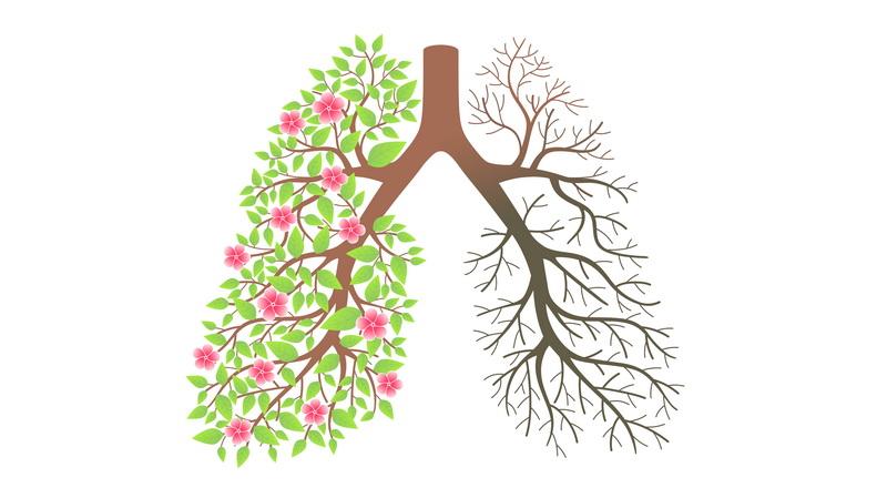 گیاهانی که ریههایتان را شست و شو میدهند